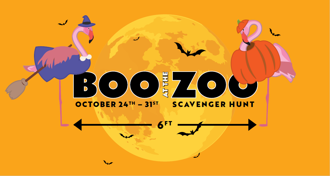 2020 Boo at the Oakland Zoo
