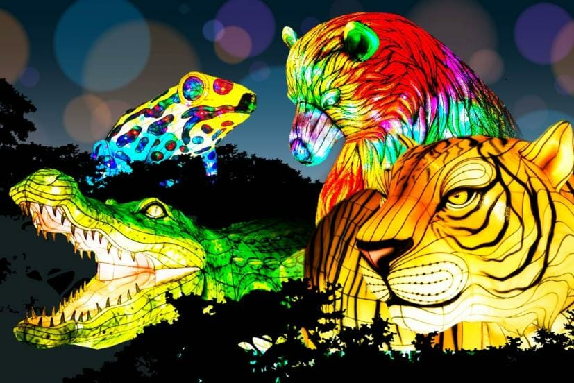 Oakland Zoo Glowfari A Wildly Illuminating Lantern Festival