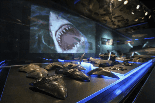 Sharks Exhibit Comes to Academy